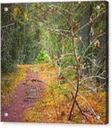 The Quiet Path Acrylic Print