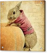 The Rabbit And The Pumpkin Acrylic Print