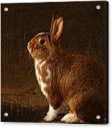 The Rabbit Acrylic Print