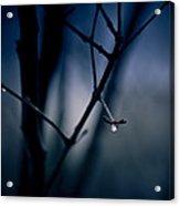 The Rain Song Acrylic Print