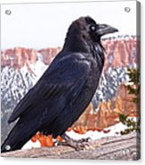 The Raven Acrylic Print by Rona Black