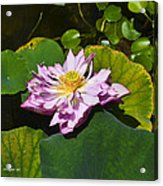 The Really Fancy Bloom Acrylic Print