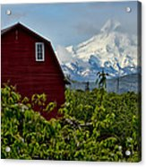 The Red Barn And Mt. Hood Acrylic Print