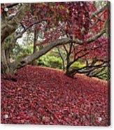 The Red Carpet Acrylic Print