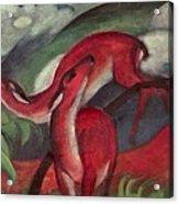 The Red Deer Acrylic Print