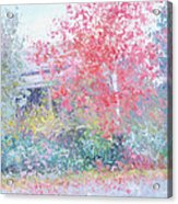 The Red Japanese Maple Tree Acrylic Print