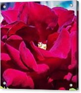 The Red Velvet Rose Acrylic Print by Jan Moore