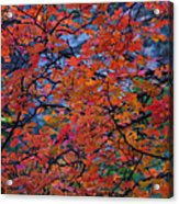 The Reds Of Autumn  Acrylic Print