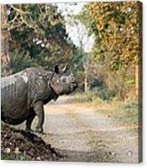 The Rhino At Kaziranga Acrylic Print