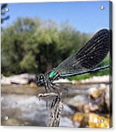 The River Dragonfly Acrylic Print