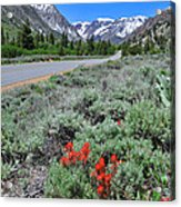 The Road Into Lundy Canyon Acrylic Print