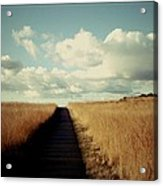 The Road Rarely Taken Acrylic Print