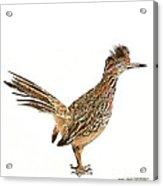 State Bird Of New Mexico Acrylic Print