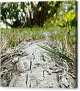 The Root Of Happiness Acrylic Print