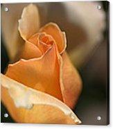 The Rose Bud Acrylic Print