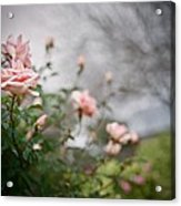 The Rose Garden Acrylic Print