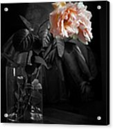 The Rose Grew Pale And Left Her Cheek Acrylic Print