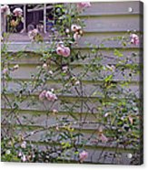 The Rose Shed Acrylic Print