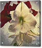 The Sadness Of Snow White And Rose Red Acrylic Print