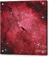 The Sadr Region In The Constellation Acrylic Print