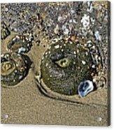 The Sand Box Acrylic Print
