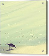 The Sandpiper Acrylic Print by Amy Tyler