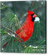 The Santa Bird Acrylic Print