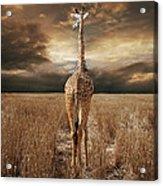 The Savannah Acrylic Print