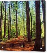 The Scenic Route Acrylic Print
