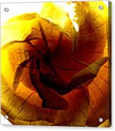 The Scorched Rose Acrylic Print