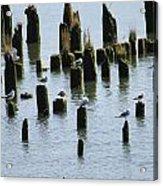 The Sea Gulls Acrylic Print