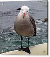The Seagull 2 Acrylic Print
