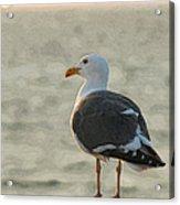 The Seagull Acrylic Print