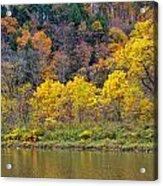 The Season Of Yellow Leaves Acrylic Print