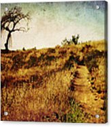 The Secret Pathway To Aspiration Acrylic Print