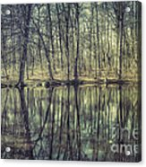The Sentient Forest Acrylic Print