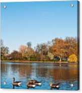 The Serpentine Ducks Acrylic Print