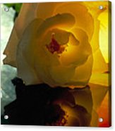 The Shadow Of A Rose Acrylic Print