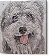 The Sheepdog Acrylic Print