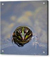 The Shy Frog Acrylic Print