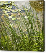 The Side Of The Lily Pond Acrylic Print