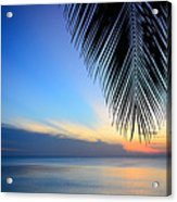 The Silhouette Coconut Leaf Acrylic Print