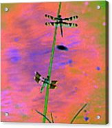 The Skimmer And The Whitetail Art #1 Acrylic Print