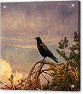 The Sky Viewer Acrylic Print