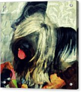 The Skye  Terrier Tilt   Acrylic Print