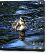 The Smallest Swimmer Acrylic Print