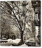 The Snow Tree - Sepia Antique Look Acrylic Print