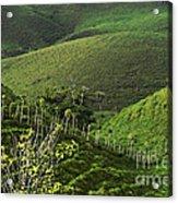The Soft Hills Of Caizan Acrylic Print