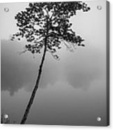 The Solitary Tree Acrylic Print