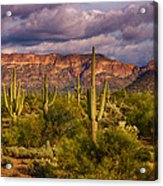 The Sonoran Golden Hour  Acrylic Print